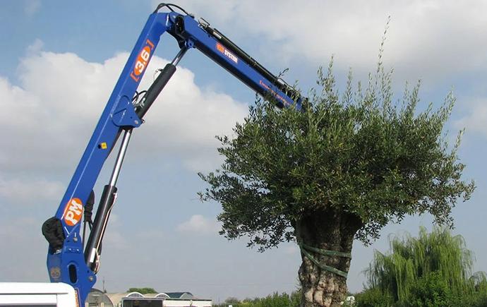 Перевезення дерев в Рівне